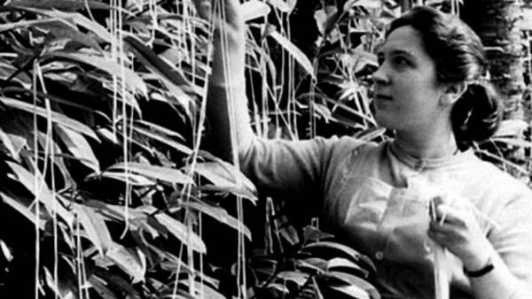Spaghetti Trees: BBC's April Mop